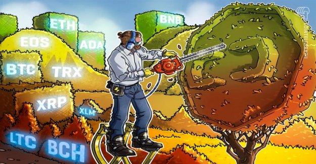 Rate analysis, 25. February: Bitcoin, Ethereum, Ripple, EOS, Litecoin, Bitcoin, Cash, Stellar, Tron, Binance Coin, Cardano