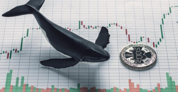 Bitcoin market sentiment: volatility reaches new heights