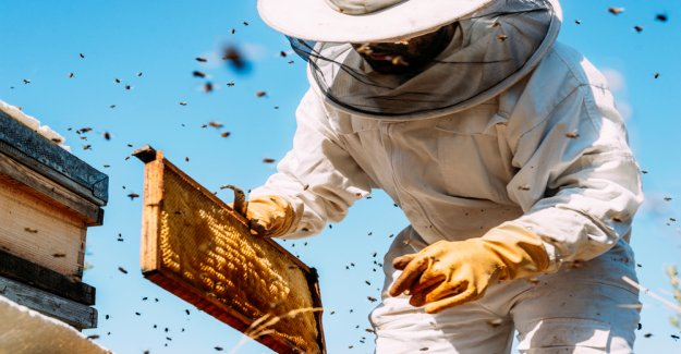 World Bee Project: With Blockchain against bees die