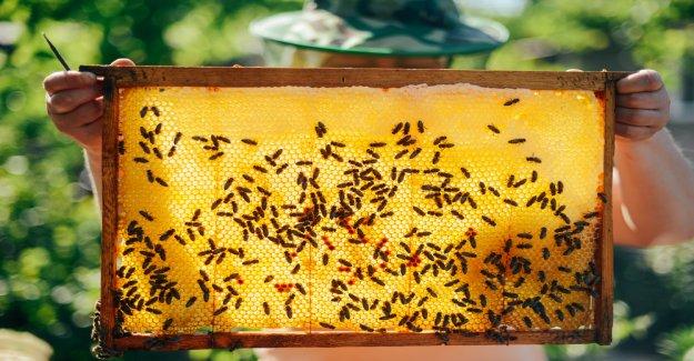 BeeCoin: Berlin Art Week combines bees and Blockchain