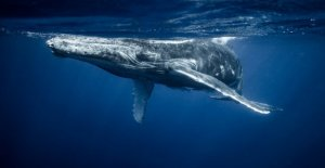 Whale Watching: Ripple whales move more than 1 billion XRP tokens