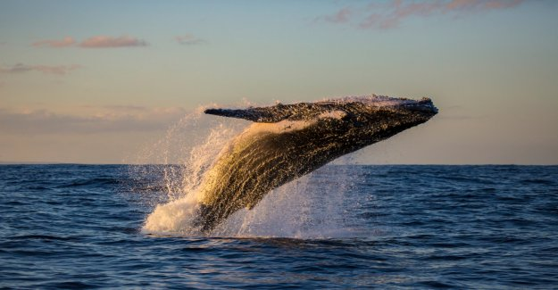 Of whales and Trading Software – the Bitcoin-rally explain