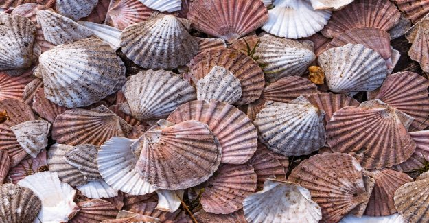 Scallops on the Blockchain: US-Fischer Raw Seafoods joins IBM's Food Trust