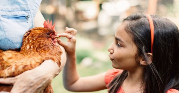 What to do if your neighbor launches into the chickens ?