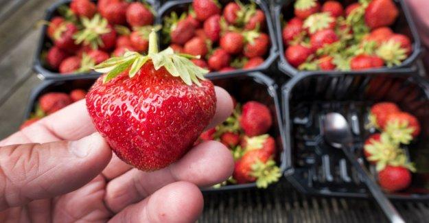 The putrid smell of Norwegian strawberries