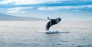 Bitcoin exchange rate Manipulation: a Single whale should have triggered an all-time high